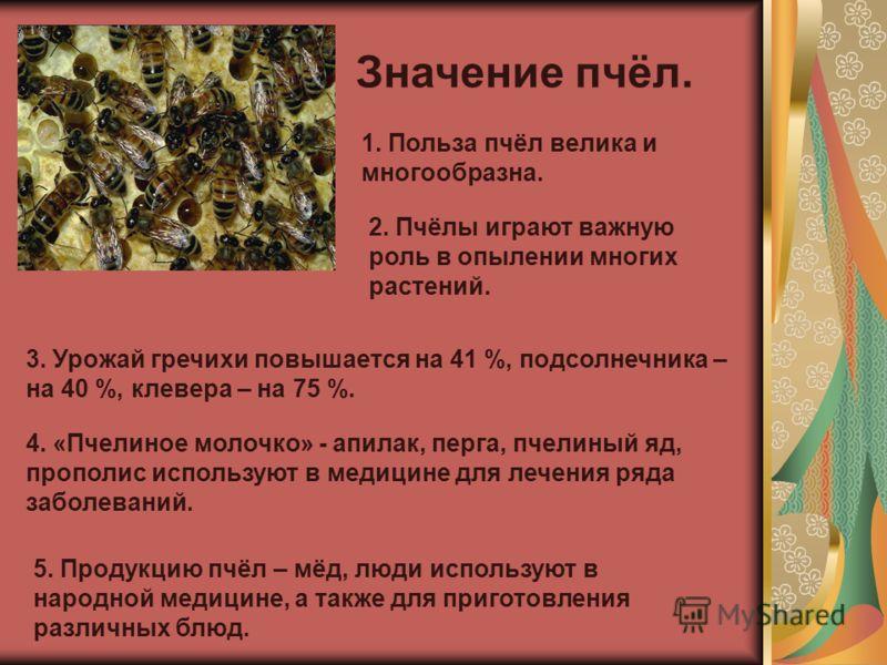 Значение пчёл. 1. Польза пчёл велика и многообразна. 4. «Пчелиное молочко» - апилак, перга, пчелиный яд, прополис используют в медицине для лечения ряда заболеваний. 2. Пчёлы играют важную роль в опылении многих растений. 3. Урожай гречихи повышается