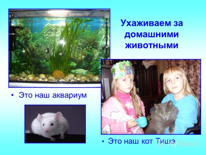 Ухаживаем за домашними животными Это наш аквариум Это наш кот Тиша
