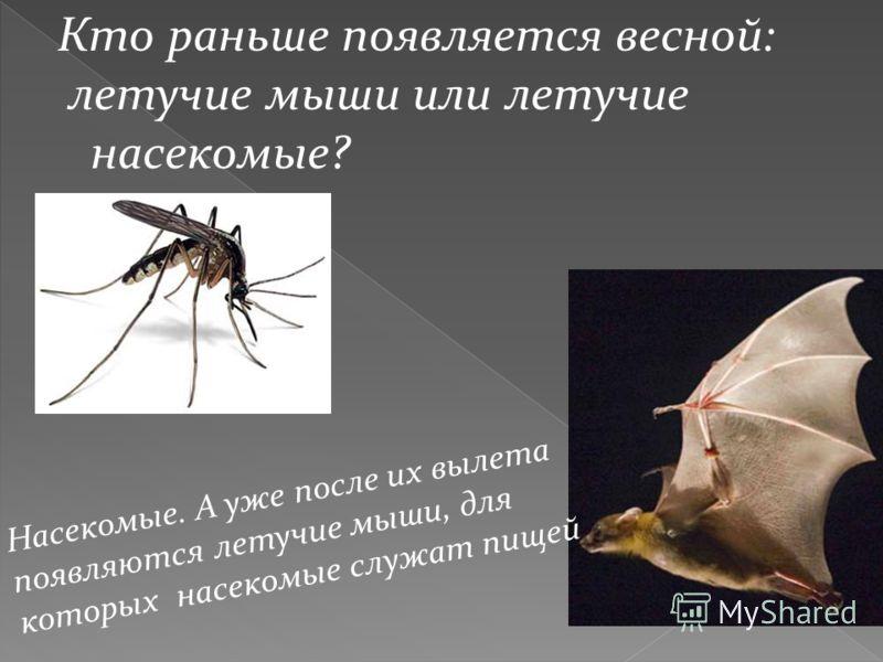 Кто раньше появляется весной: летучие мыши или летучие насекомые? Насекомые. А уже после их вылета появляются летучие мыши, для которых насекомые служат пищей