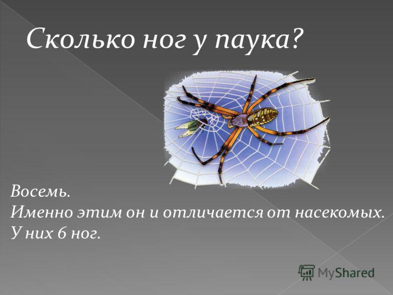 Сколько ног у паука? Восемь. Именно этим он и отличается от насекомых. У них 6 ног.