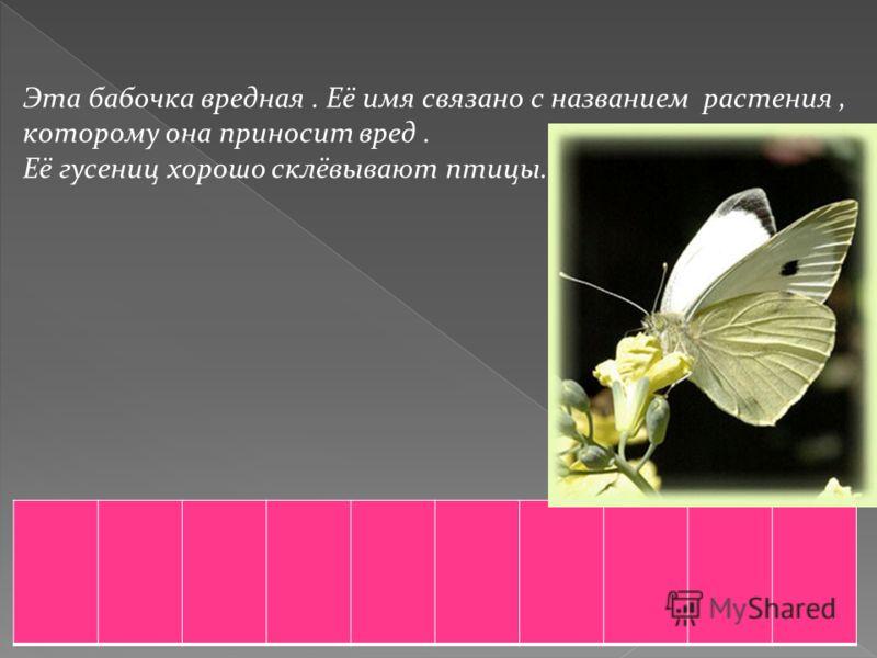 Эта бабочка вредная. Её имя связано с названием растения, которому она приносит вред. Её гусениц хорошо склёвывают птицы.