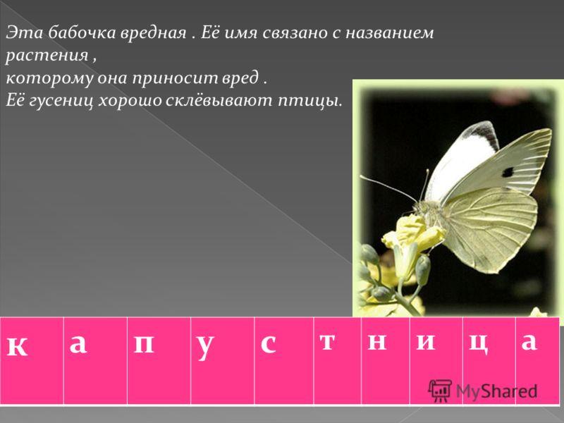 Эта бабочка вредная. Её имя связано с названием растения, которому она приносит вред. Её гусениц хорошо склёвывают птицы. к апус тница