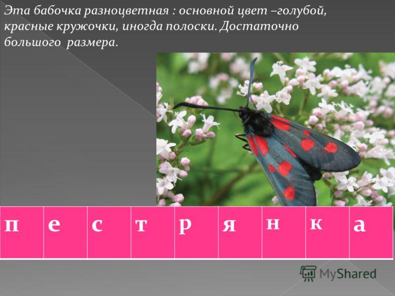 Эта бабочка разноцветная : основной цвет –голубой, красные кружочки, иногда полоски. Достаточно большого размера. пест р я нк а