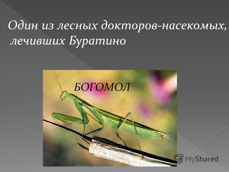 Один из лесных докторов-насекомых, лечивших Буратино БОГОМОЛ