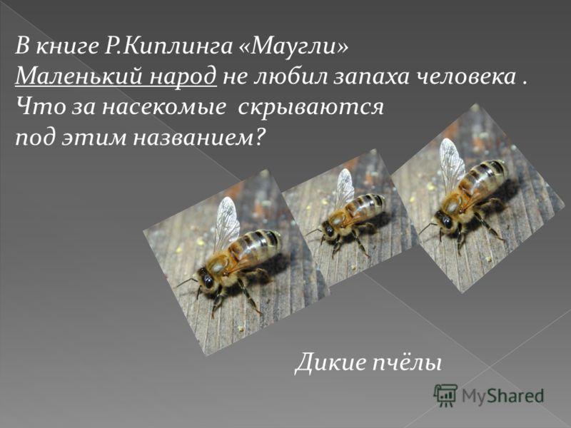 В книге Р.Киплинга «Маугли» Маленький народ не любил запаха человека. Что за насекомые скрываются под этим названием? Дикие пчёлы