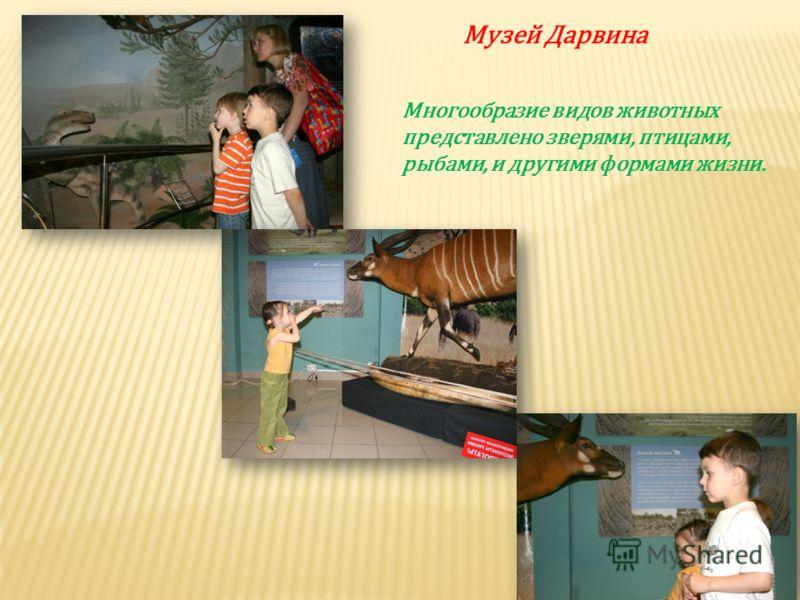 Музей Дарвина Многообразие видов животных представлено зверями, птицами, рыбами, и другими формами жизни.