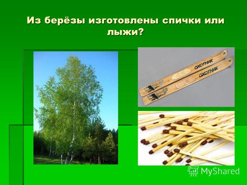 Из берёзы изготовлены спички или лыжи?