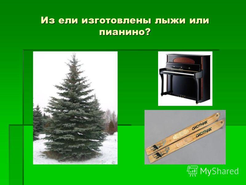 Из ели изготовлены лыжи или пианино?