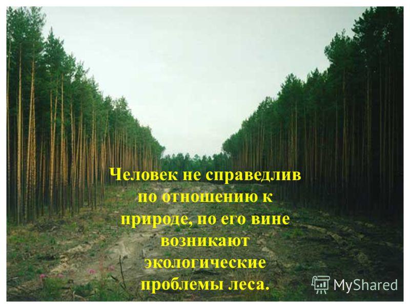 Человек не справедлив по отношению к природе, по его вине возникают экологические проблемы леса.