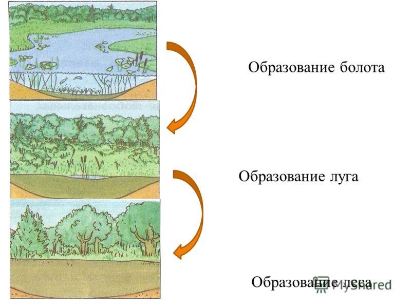 Образование болота Образование луга Образование леса