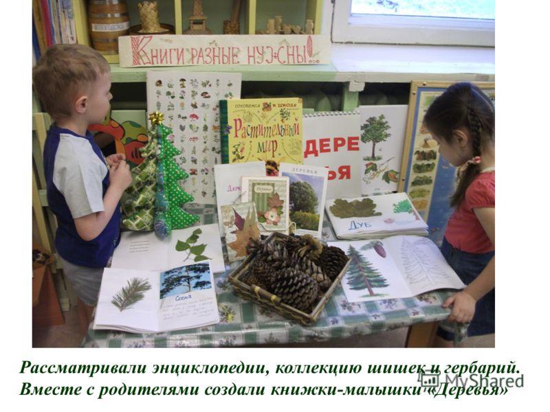 Рассматривали энциклопедии, коллекцию шишек и гербарий. Вместе с родителями создали книжки-малышки «Деревья»