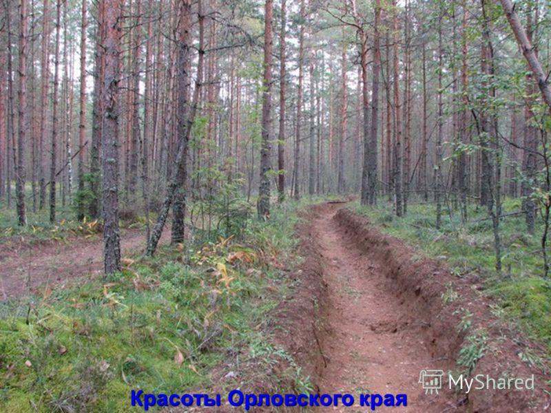 Красоты Орловского края