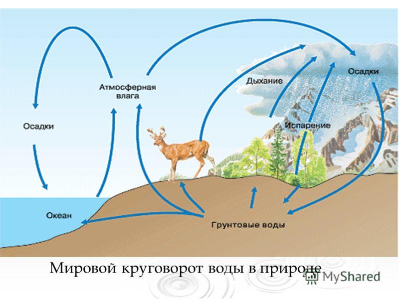 Мировой круговорот воды в природе.