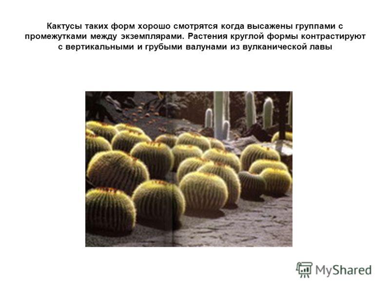 Кактусы таких форм хорошо смотрятся когда высажены группами с промежутками между экземплярами. Растения круглой формы контрастируют с вертикальными и грубыми валунами из вулканической лавы