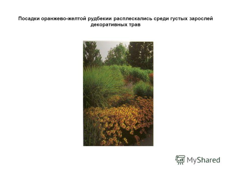Посадки оранжево-желтой рудбекии расплескались среди густых зарослей декоративных трав