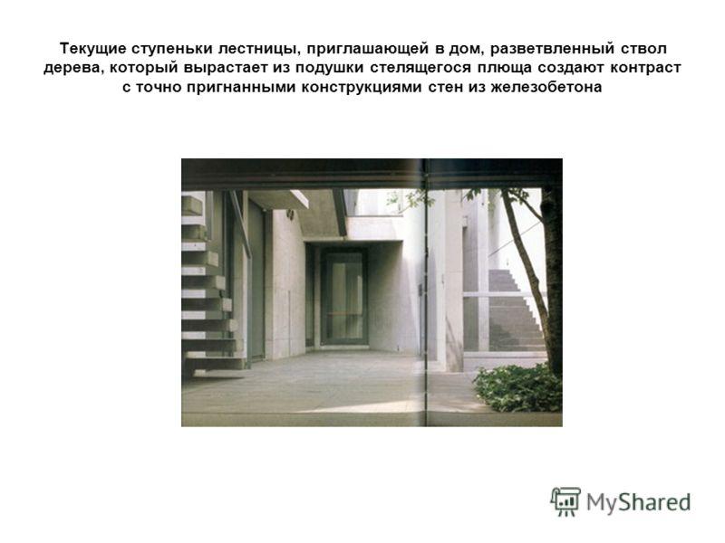 Текущие ступеньки лестницы, приглашающей в дом, разветвленный ствол дерева, который вырастает из подушки стелящегося плюща создают контраст с точно пригнанными конструкциями стен из железобетона