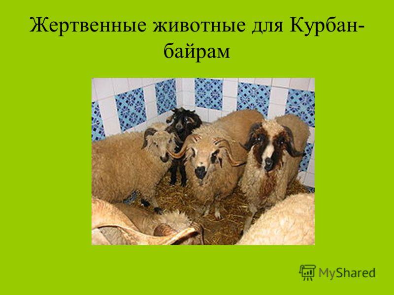 Жертвенные животные для Курбан- байрам