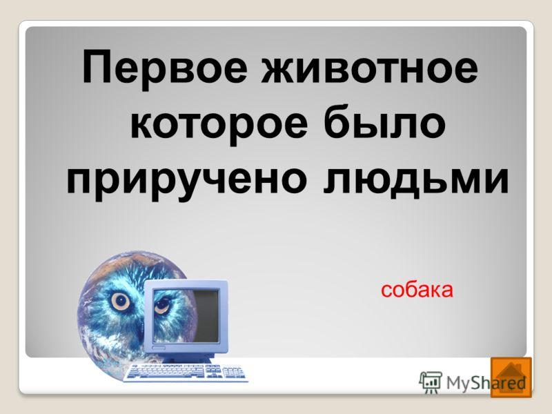 История Казахстана Математика Физика Химия Информатика