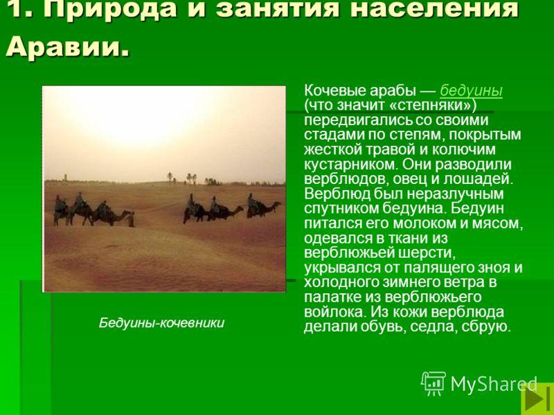 1. Природа и занятия населения Аравии. Кочевые арабы бедуины (что значит «степняки») передвигались со своими стадами по степям, покрытым жесткой травой и колючим кустарником. Они разводили верблюдов, овец и лошадей. Верблюд был неразлучным спутником