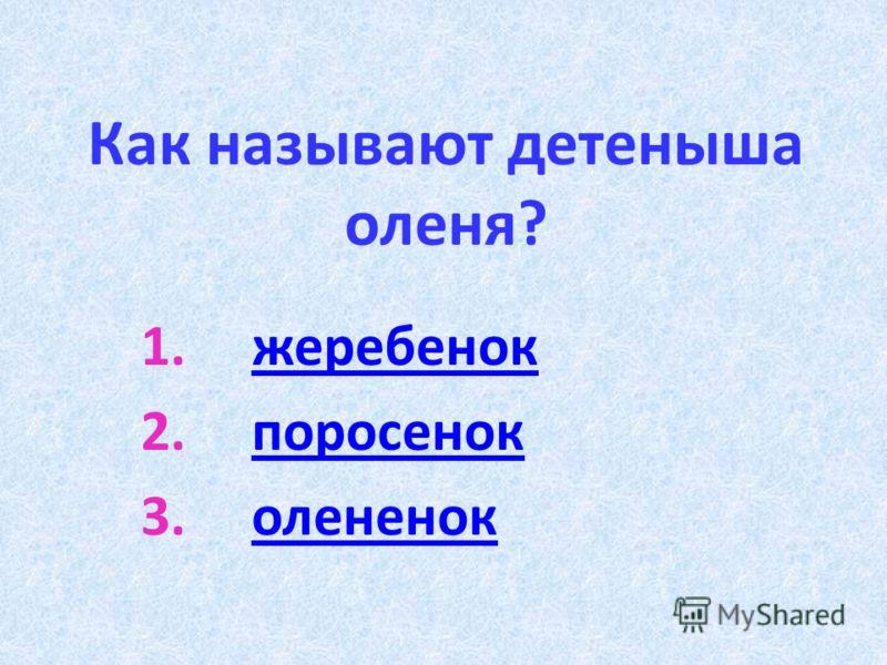 Как называют детеныша оленя? 1.жеребенокжеребенок 2.поросенокпоросенок 3.олененоколененок