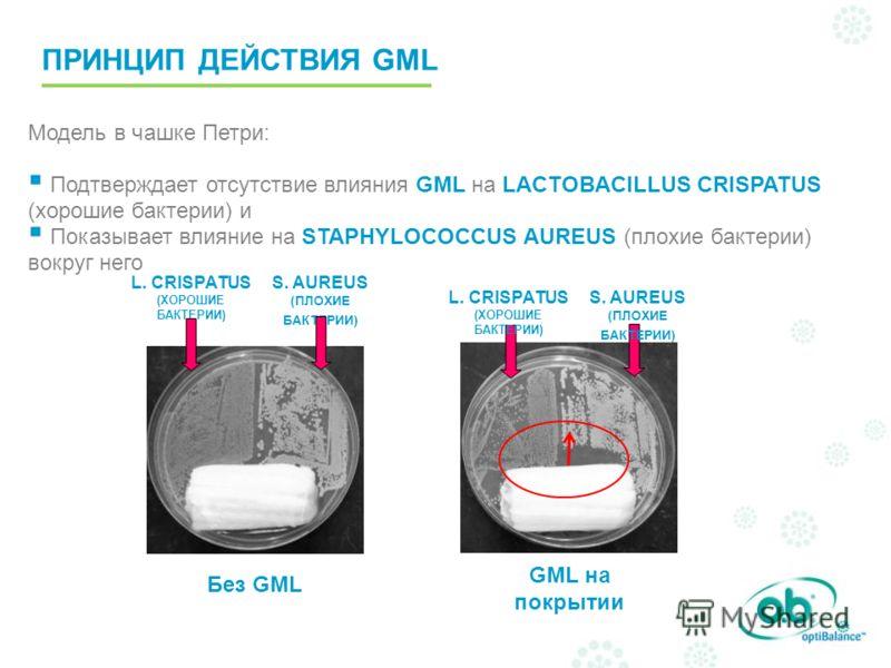 Без GML GML на покрытии S. AUREUS (ПЛОХИЕ БАКТЕРИИ) L. CRISPATUS (ХОРОШИЕ БАКТЕРИИ) Модель в чашке Петри: Подтверждает отсутствие влияния GML на LACTOBACILLUS CRISPATUS (хорошие бактерии) и Показывает влияние на STAPHYLOCOCCUS AUREUS (плохие бактерии