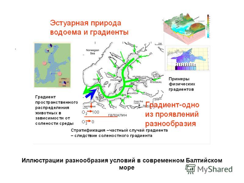 . Иллюстрации разнообразия условий в современном Балтийском море