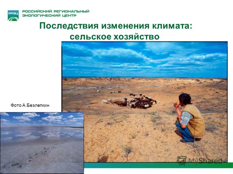Последствия изменения климата: сельское хозяйство Фото А.Безлепкин