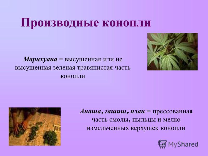 Производные конопли Марихуана – высушенная или не высушенная зеленая травянистая часть конопли Анаша, гашиш, план – прессованная часть смолы, пыльцы и мелко измельченных верхушек конопли