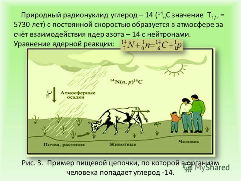 Природный радионуклид углерод – 14 ( 14 6 С значение Т 1/2 = 5730 лет) с постоянной скоростью образуется в атмосфере за счёт взаимодействия ядер азота – 14 с нейтронами. Уравнение ядерной реакции: Рис. 3. Пример пищевой цепочки, по которой в организм