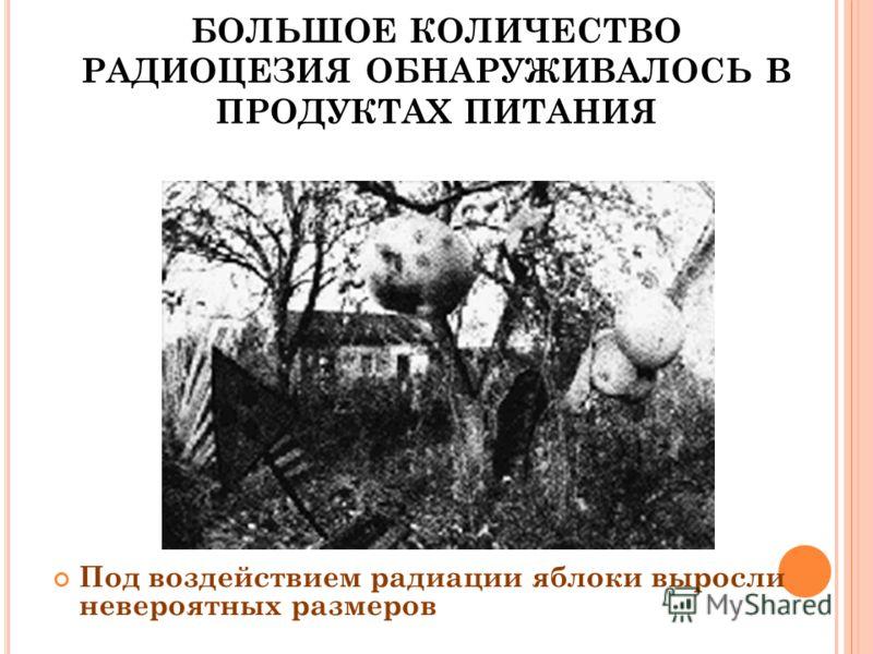 БОЛЬШОЕ КОЛИЧЕСТВО РАДИОЦЕЗИЯ ОБНАРУЖИВАЛОСЬ В ПРОДУКТАХ ПИТАНИЯ Под воздействием радиации яблоки выросли невероятных размеров