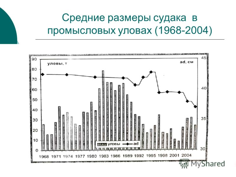 Средние размеры судака в промысловых уловах (1968-2004)