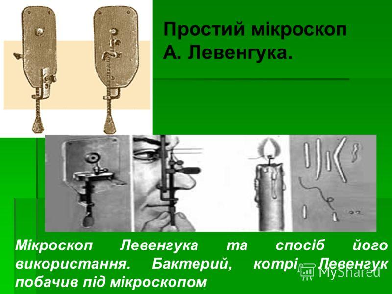 Простий мікроскоп А. Левенгука. Мікроскоп Левенгука та спосіб його використання. Бактерий, котрі Левенгук побачив під мікроскопом