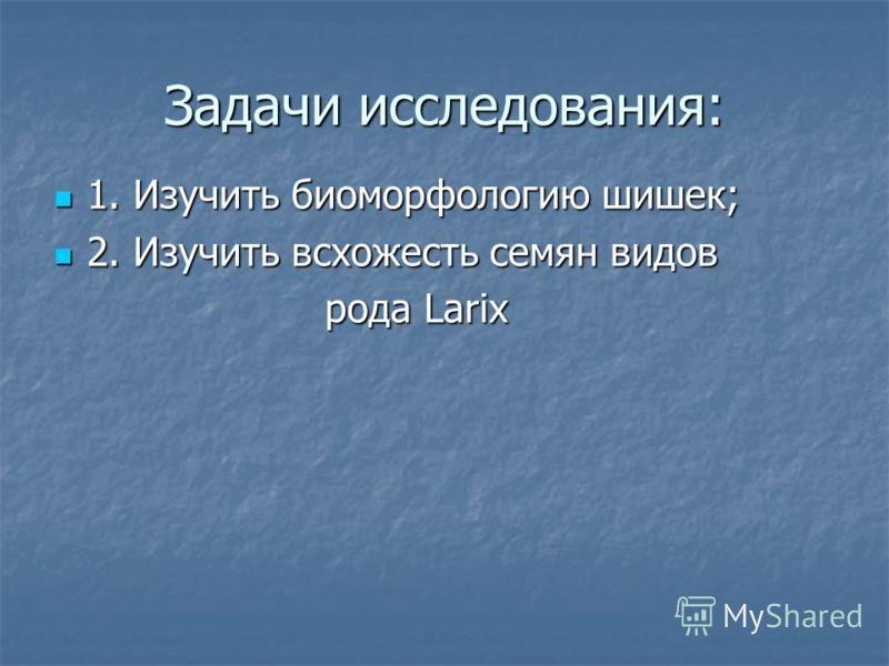 Задачи исследования: 1. Изучить биоморфологию шишек; 1. Изучить биоморфологию шишек; 2. Изучить всхожесть семян видов 2. Изучить всхожесть семян видов рода Larix рода Larix