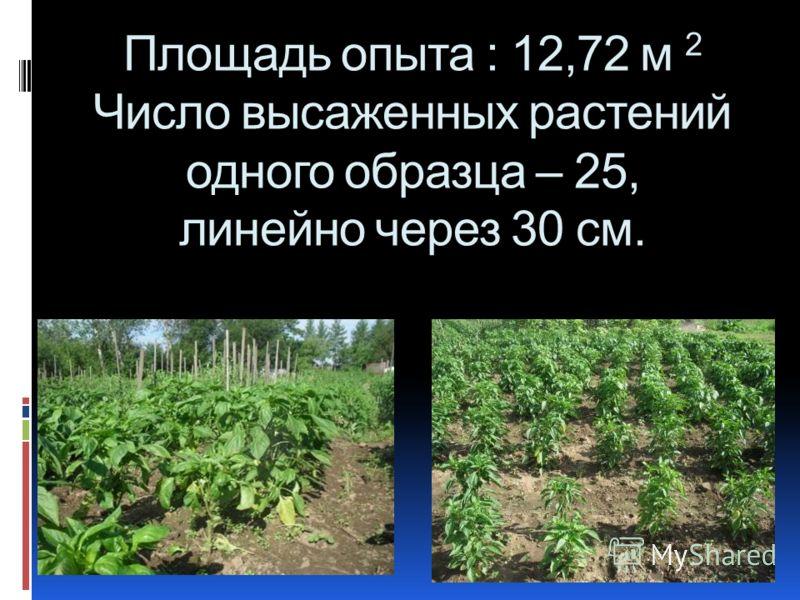 Площадь опыта : 12,72 м 2 Число высаженных растений одного образца – 25, линейно через 30 см.