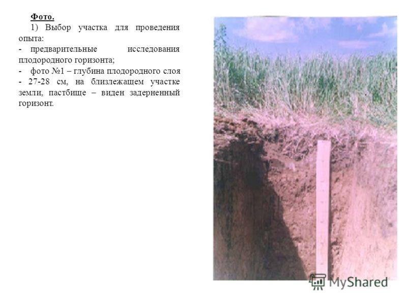 Фото. 1) Выбор участка для проведения опыта: -предварительные исследования плодородного горизонта; -фото 1 – глубина плодородного слоя - 27-28 см, на близлежащем участке земли, пастбище – виден задерненный горизонт.