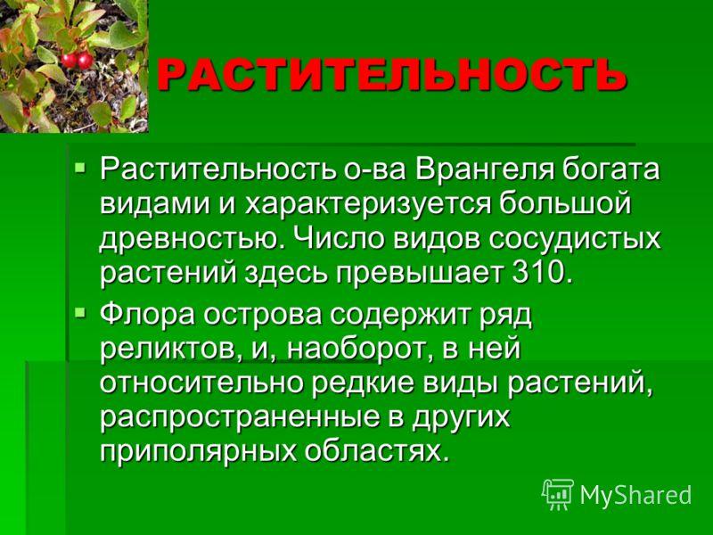 РАСТИТЕЛЬНОСТЬ РАСТИТЕЛЬНОСТЬ Растительность о-ва Врангеля богата видами и характеризуется большой древностью. Число видов сосудистых растений здесь превышает 310. Растительность о-ва Врангеля богата видами и характеризуется большой древностью. Число
