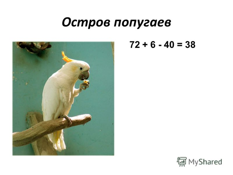 Остров попугаев 72 + 6 - 40 = 38