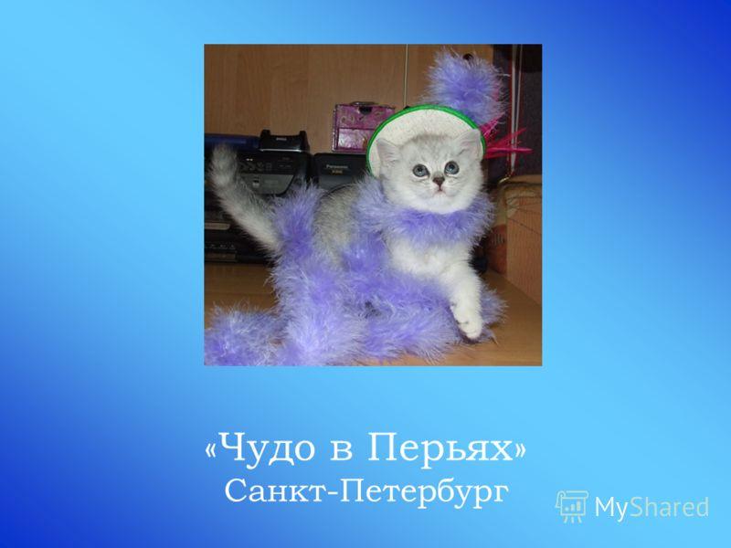 «Чудо в Перьях» Санкт-Петербург