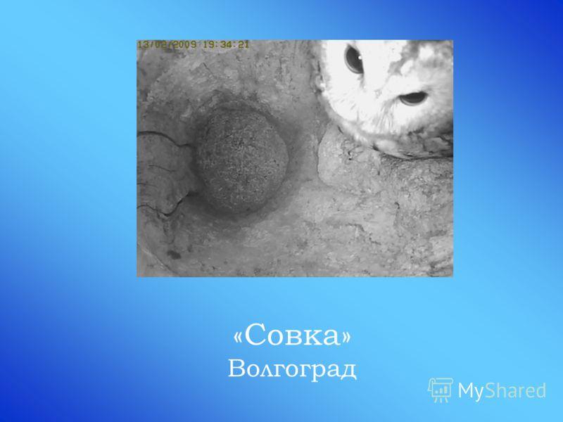 «Совка» Волгоград