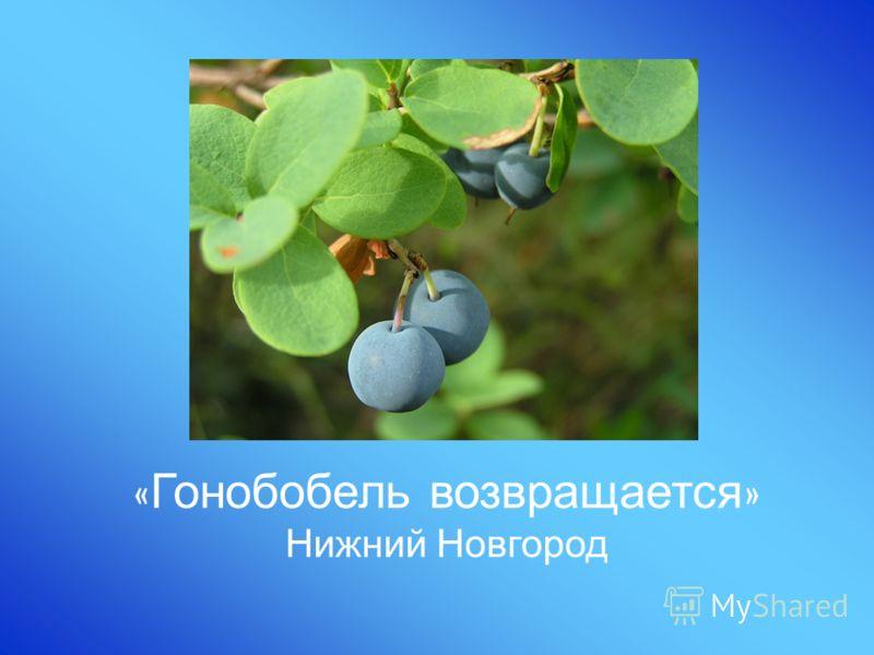 « Гонобобель возвращается » Нижний Новгород