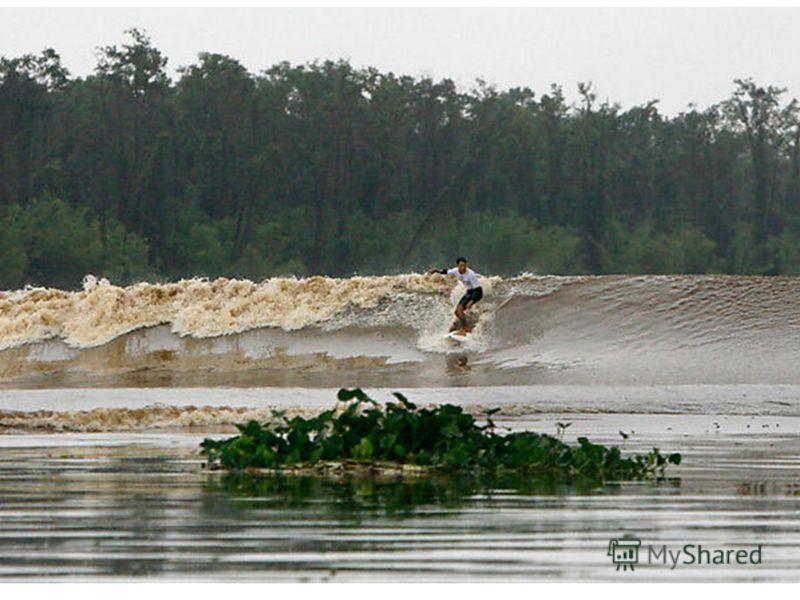 На режим нижнего течения этой реки особое влияние оказывают морские приливы, которые распространяются вверх по реке на 1400км. Приливная волна высотой до 5 м с большой скоростью и сильным гулом мчится вверх по реке, заливая берега. На какой реке набл