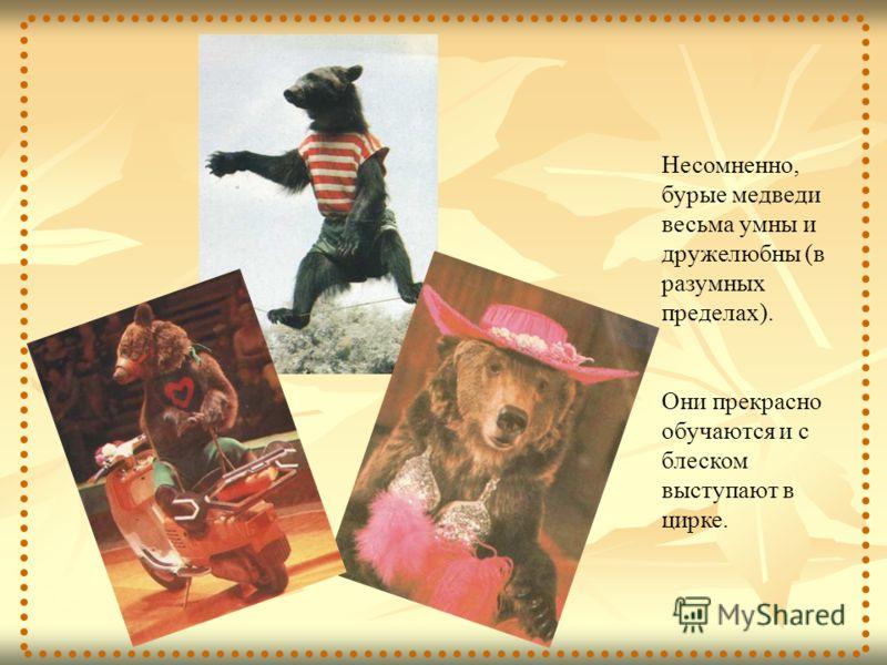 Несомненно, бурые медведи весьма умны и дружелюбны (в разумных пределах). Они прекрасно обучаются и с блеском выступают в цирке.