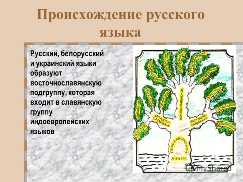 Происхождение русского языка Русский, белорусский и украинский языки образуют восточнославянскую подгруппу, которая входит в славянскую группу индоевропейских языков.