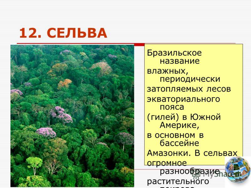 12. СЕЛЬВА Бразильское название влажных, периодически затопляемых лесов экваториального пояса (гилей) в Южной Америке, в основном в бассейне Амазонки. В сельвах огромное разнообразие растительного покрова