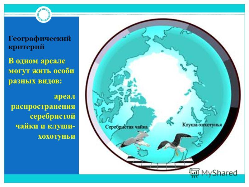 В одном ареале могут жить особи разных видов: ареал распространения серебристой чайки и клуши- хохотуньи