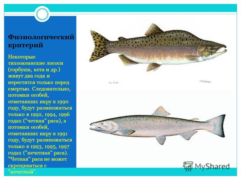 Физиологический критерий Некоторые тихоокеанские лососи (горбуша, кета и др.) живут два года и нерестятся только перед смертью. Следовательно, потомки особей, отметавших икру в 1990 году, будут размножаться только в 1992, 1994, 1996 годах (