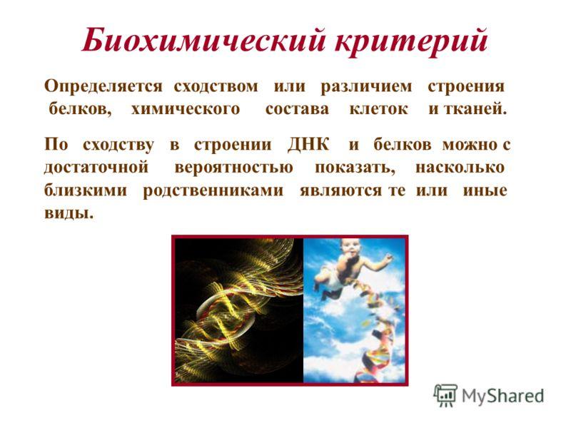 Биохимический критерий Определяется сходством или различием строения белков, химического состава клеток и тканей. По сходству в строении ДНК и белков можно с достаточной вероятностью показать, насколько близкими родственниками являются те или иные ви