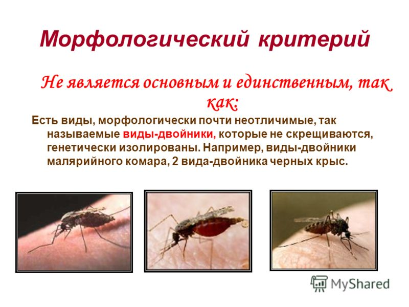 Не является основным и единственным, так как: Есть виды, морфологически почти неотличимые, так называемые виды-двойники, которые не скрещиваются, генетически изолированы. Например, виды-двойники малярийного комара, 2 вида-двойника черных крыс.