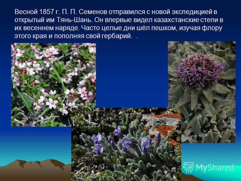 Весной 1857 г. П. П. Семенов отправился с новой экспедицией в открытый им Тянь-Шань. Он впервые видел казахстанские степи в их весеннем наряде. Часто целые дни шёл пешком, изучая флору этого края и пополняя свой гербарий..