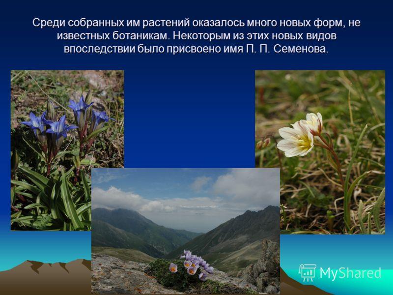 Среди собранных им растений оказалось много новых форм, не известных ботаникам. Некоторым из этих новых видов впоследствии было присвоено имя П. П. Семенова.
